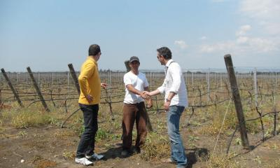 Nicola Biscado and Andrea Tinazzi in the NegroAmaro Vineyard at San Nicola estate