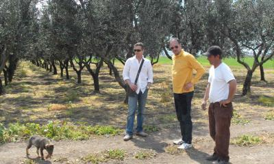 Nicola Biscardo and Andrea Tinazzi with the Olive trees in San Nicola